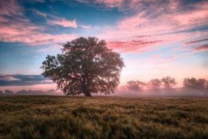 Field Morning Sunrise Dawn Nature  - LagrangeHervé / Pixabay